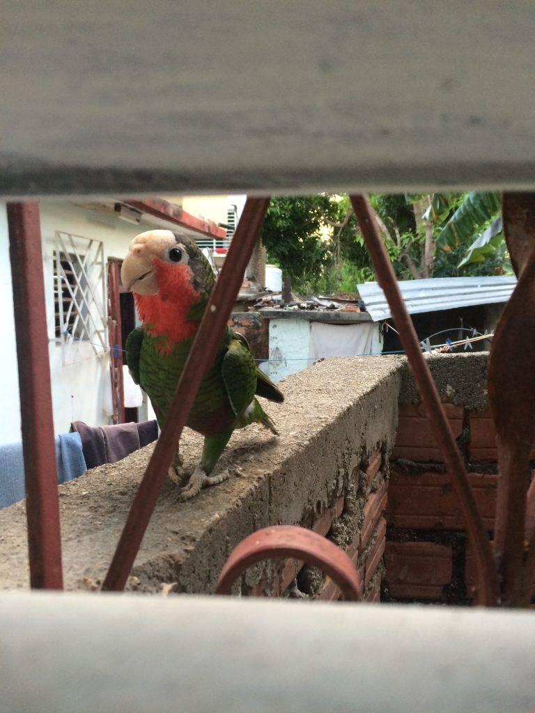 Papegøye-besøk