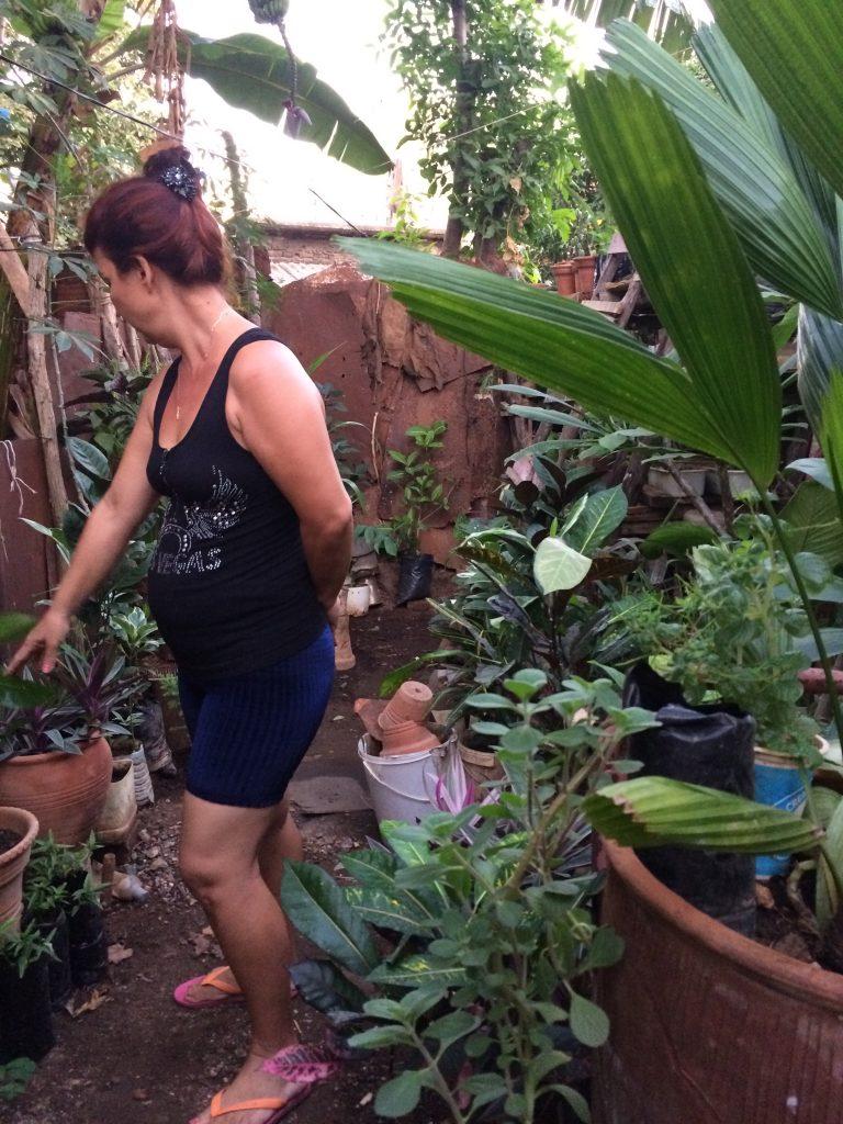 blomster handel på Cuba