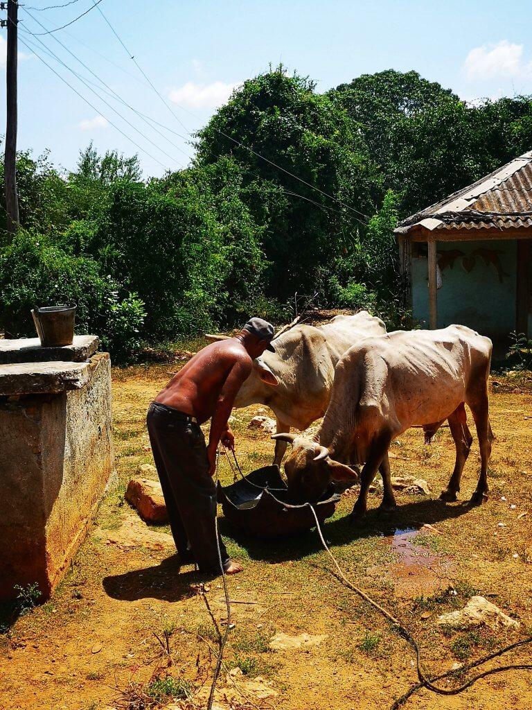Landsbygda på Cuba. Besøk den med oss