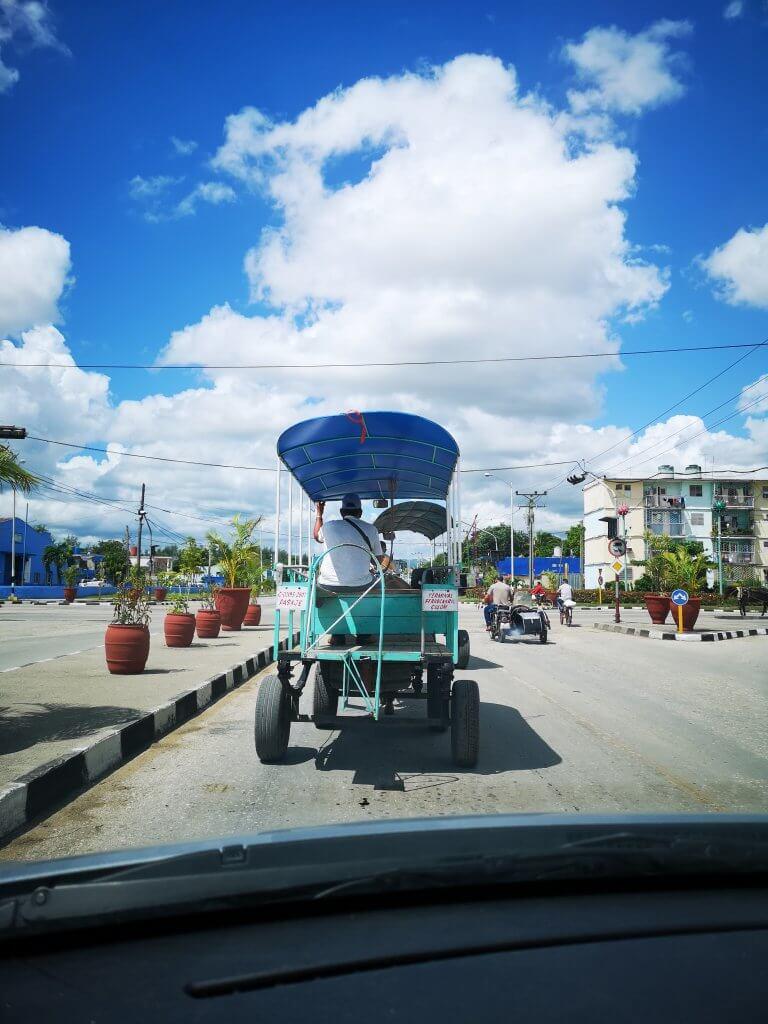 Dyr i veien. Kjør forsiktig på Cuba