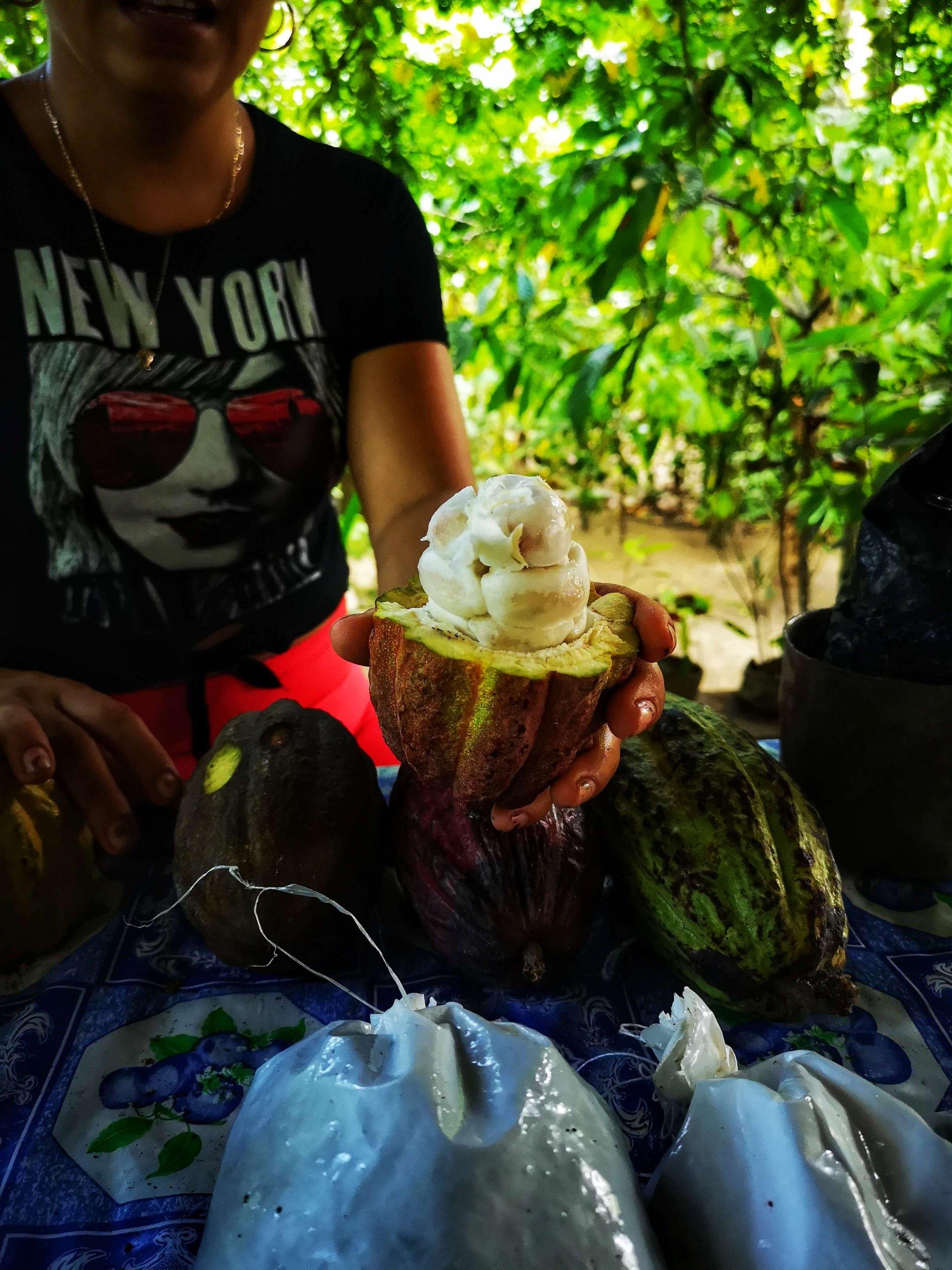 Besøk en kakaogård